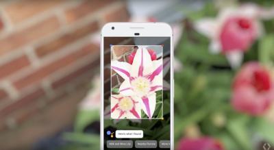 flower google lens