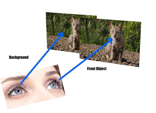 dual cam human eye